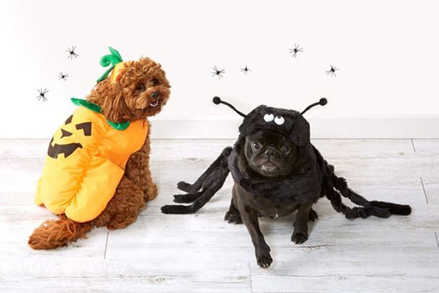 Kmart's adorable Halloween pet costumes are driving everyone wild