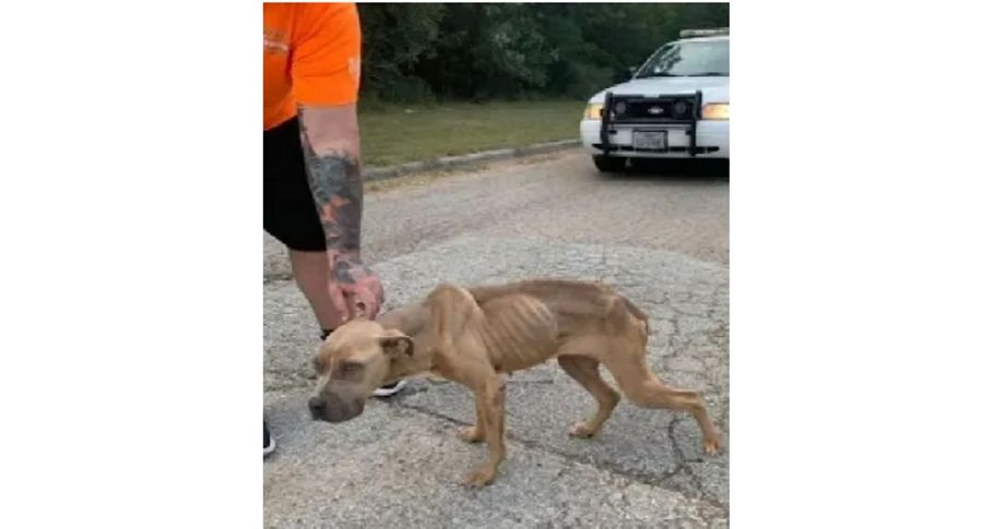 Woman accused of 'hurling malnourished dog out of car window'