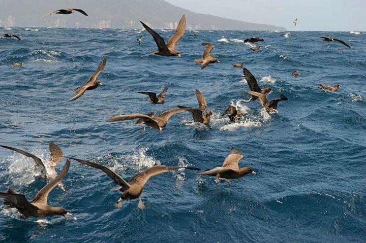 Image result for dead birds sydney