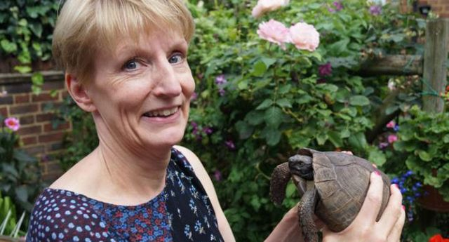 90-year old pet tortoise accidentally thrown out with the garbage