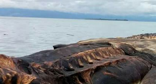 Massive mysterious sea creature washes up on island