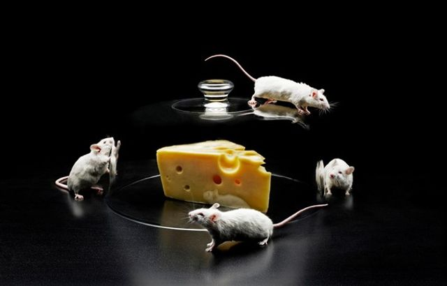 How to rid your home of mice naturally